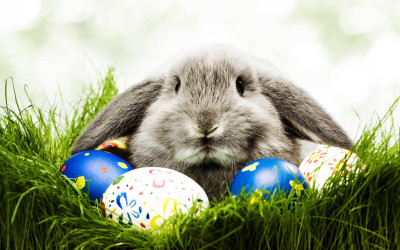 Spotlight on: the Easter Bunny